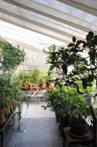 The orchid lover's greenhouse dreamhouse