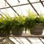 greenhouse concept